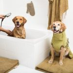 SICCARO_2 retrievers in bath_Supreme_mat_Land